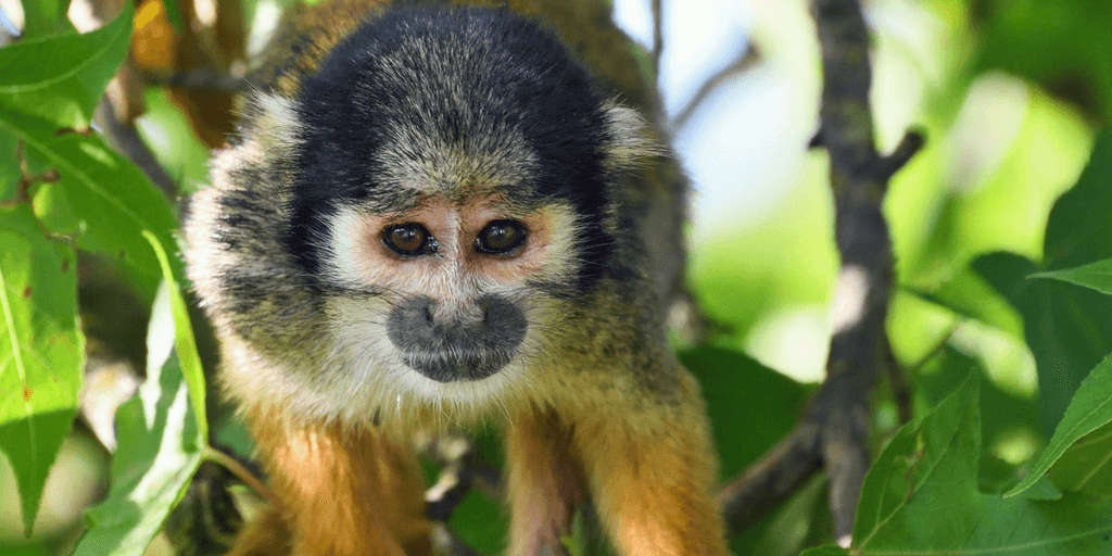 See Peru amazon animals when you volunteer for wildlife conservation
