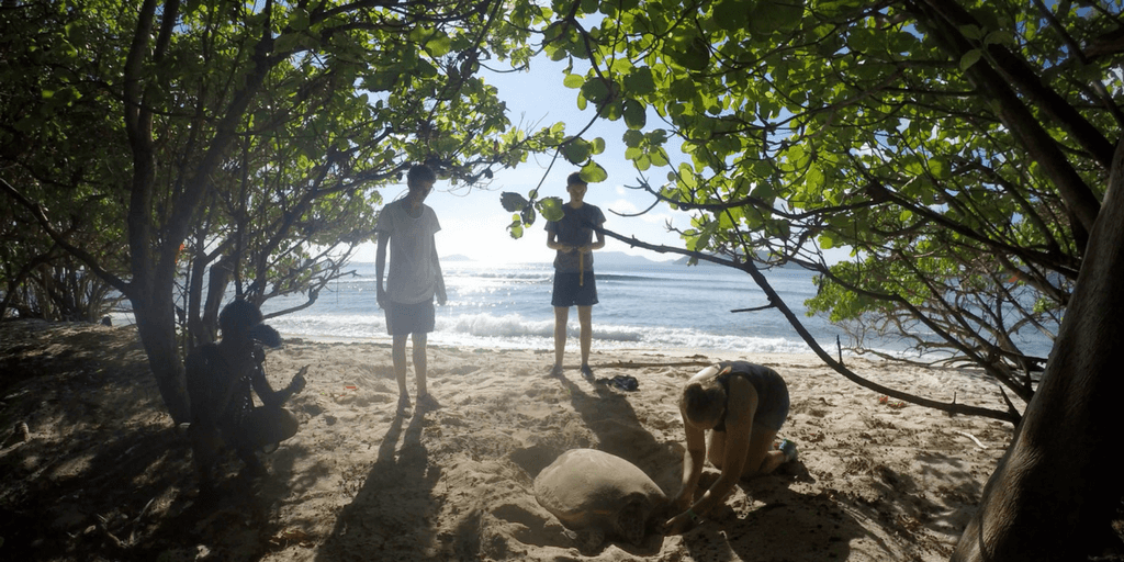 Lemon Shark And Turtle Research Project In Seychelles