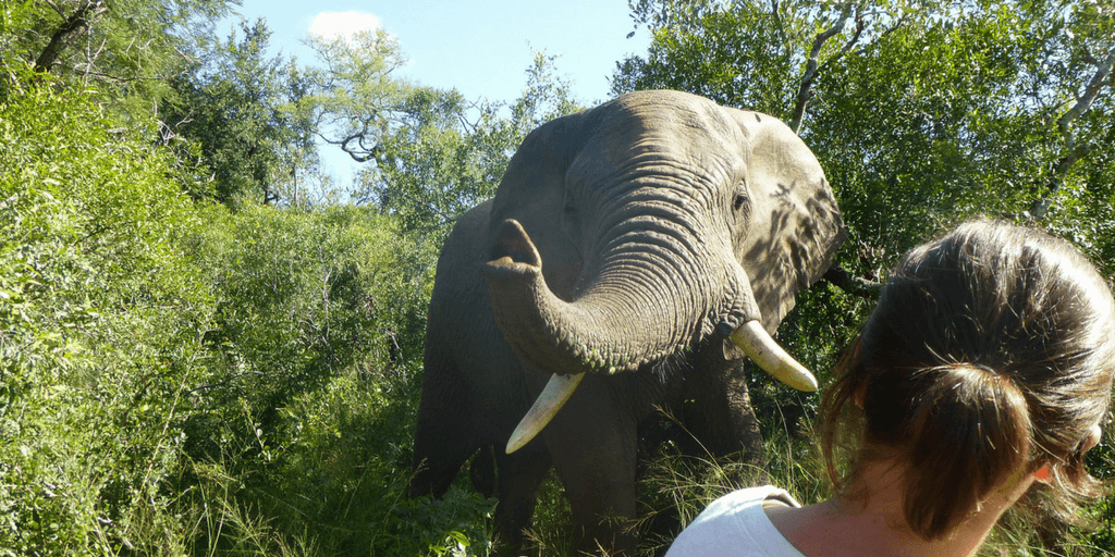 Seeing how volunteers react to their first interaction with South Africa's wildlife is what Leah loves about working with international volunteers.
