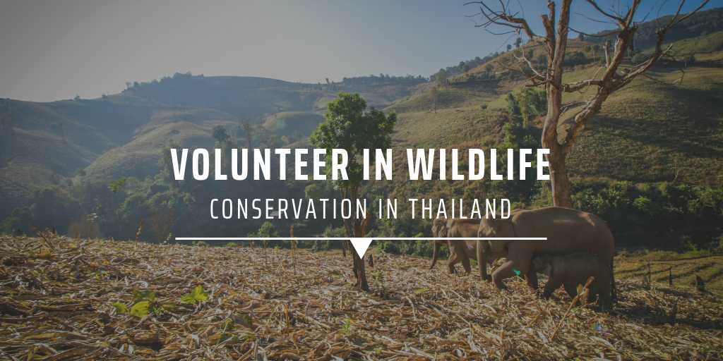 Conservation volunteering