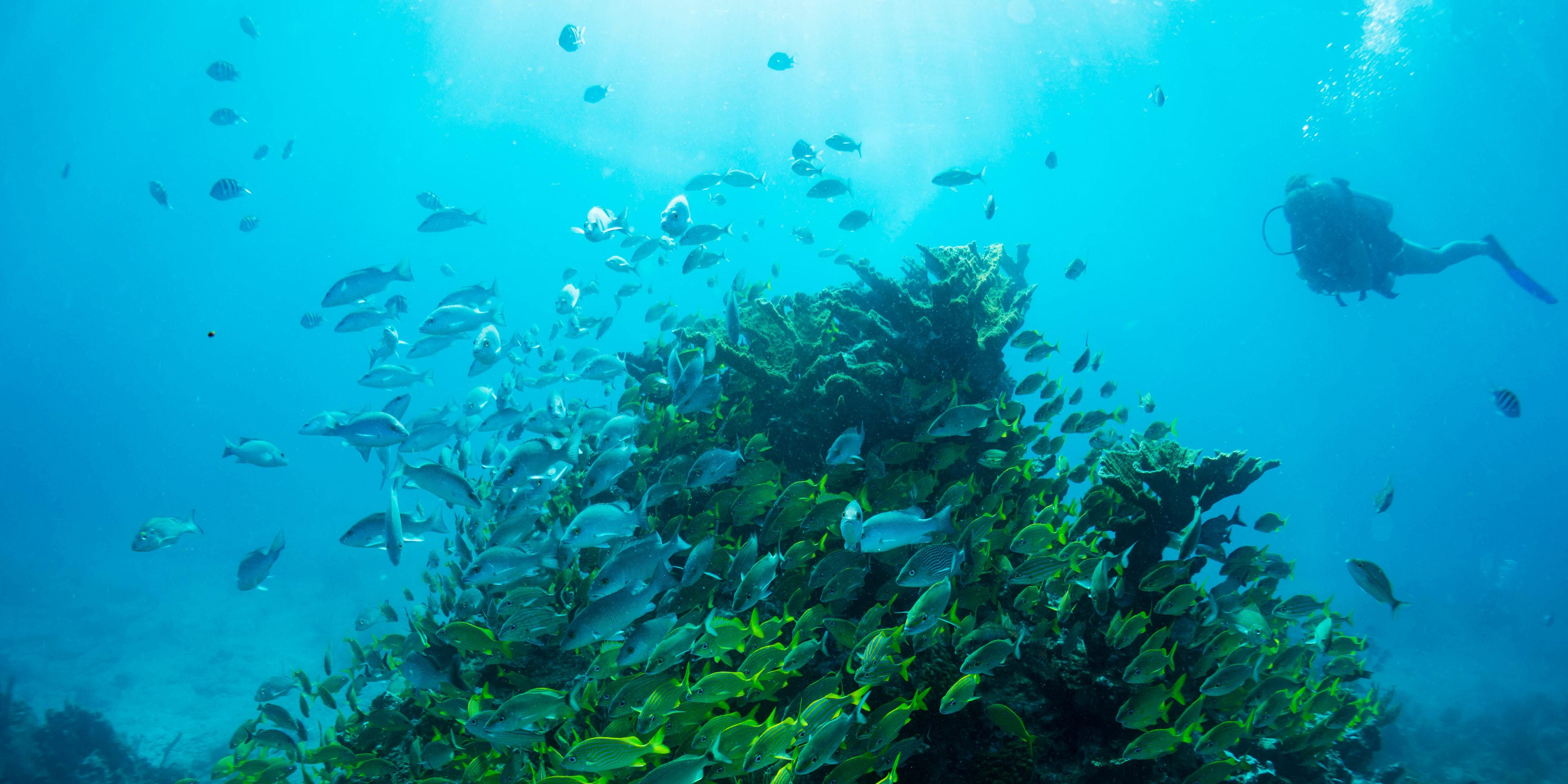 puerto morelos diving
