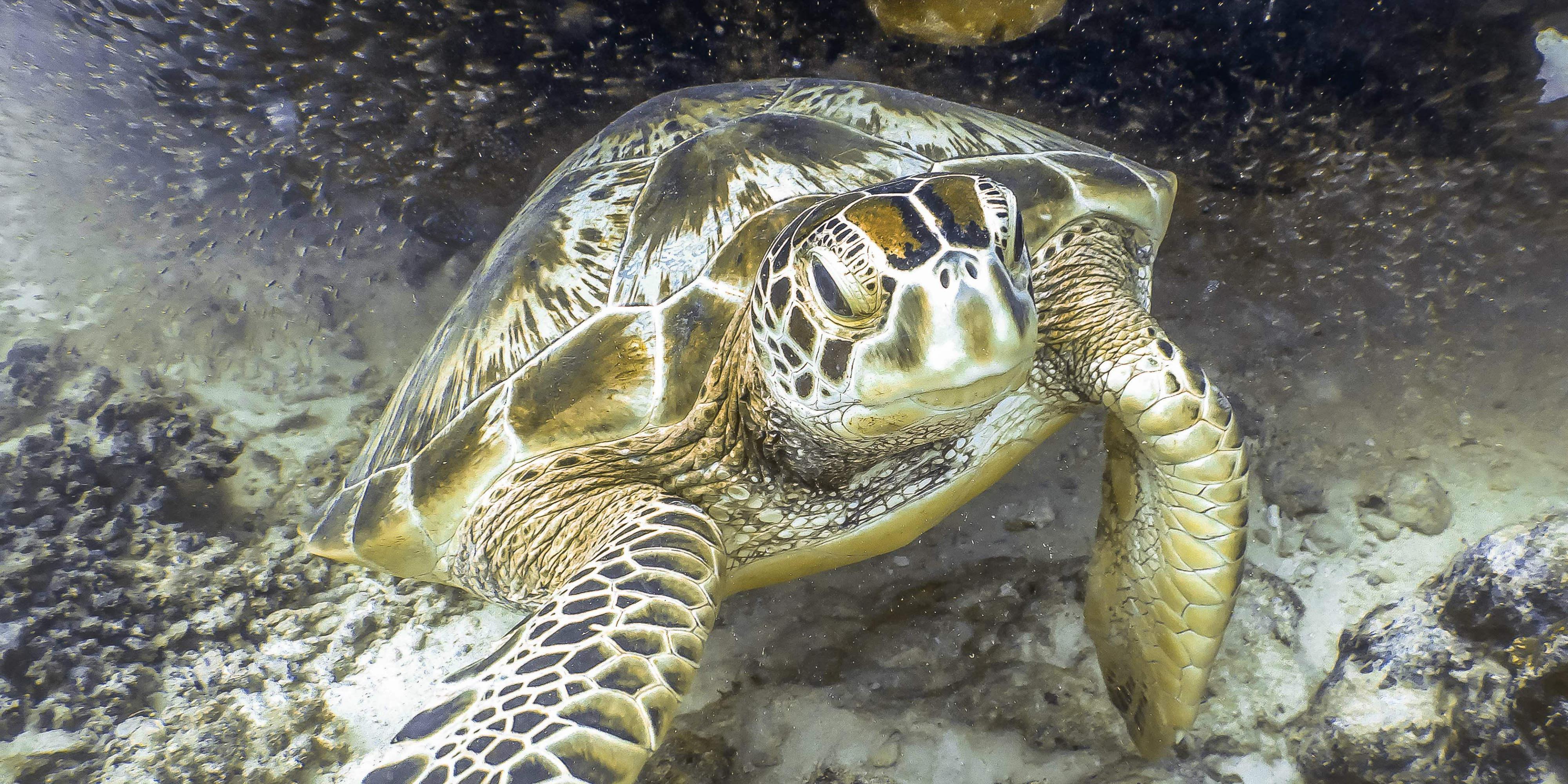 seychelles coral reefs