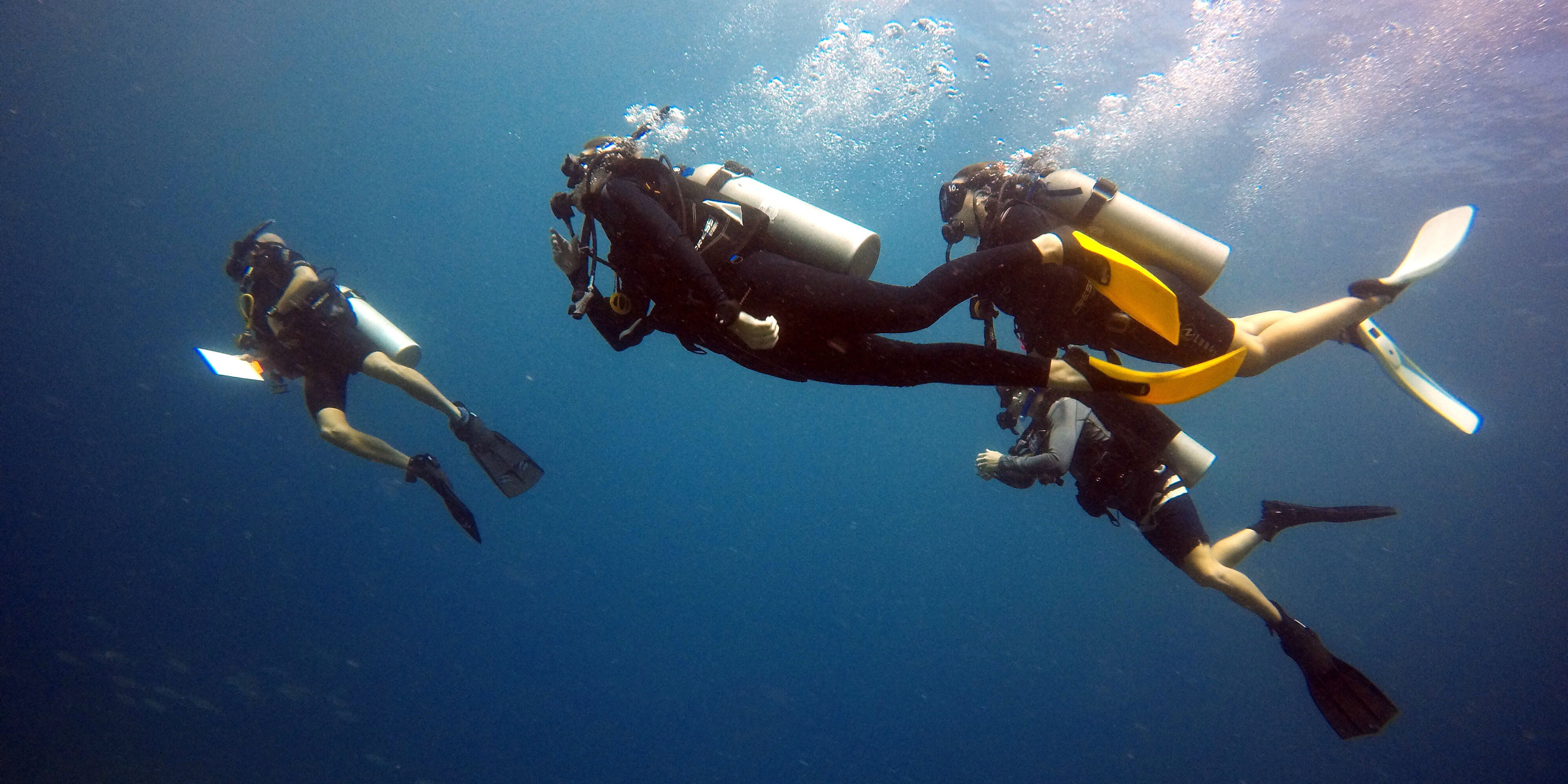 GVI participants work towards their PADI dive certification while collecting data on marine life in Seychelles.