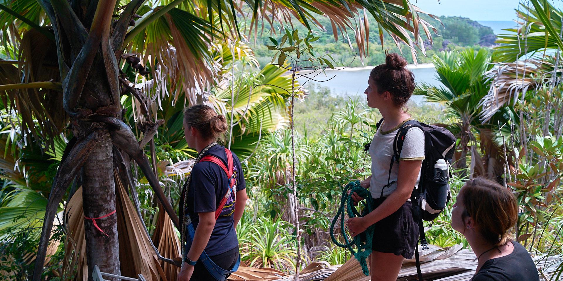 GVI participants conduct surveys of the coco de mer palm.