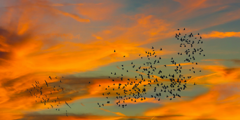Light pollution can impact bird migration