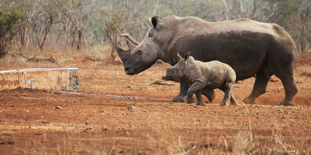 Help conserve endangered species like rhino