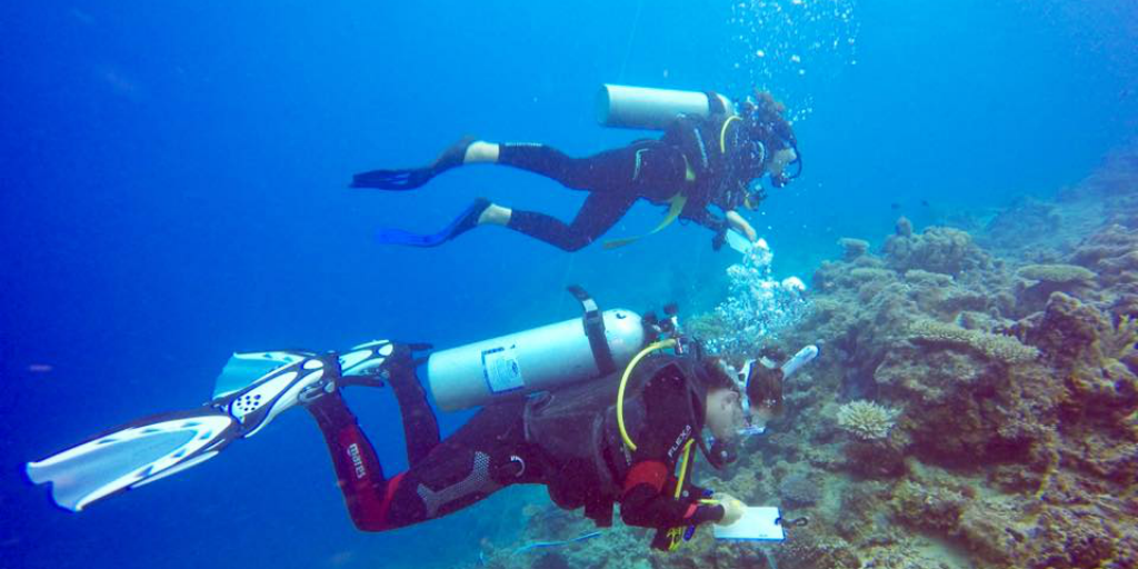 Scuba diving volunteer projects with GVI