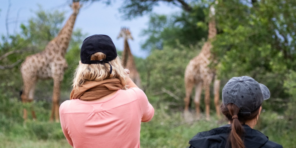 2 participants watching giraffes