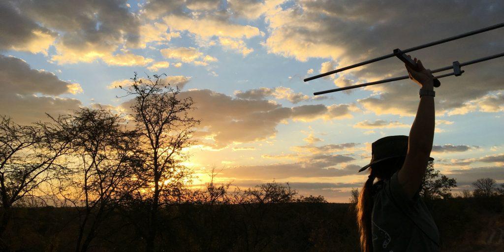 Volunteer tracking animals in Limpopo