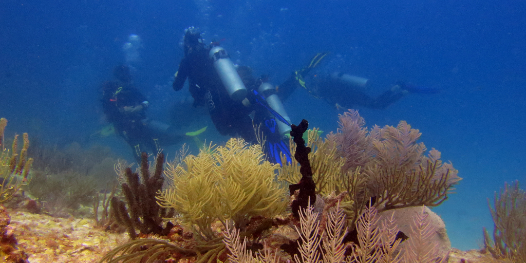 The GVI volunteers work on the conservation of the marine ecosystem.