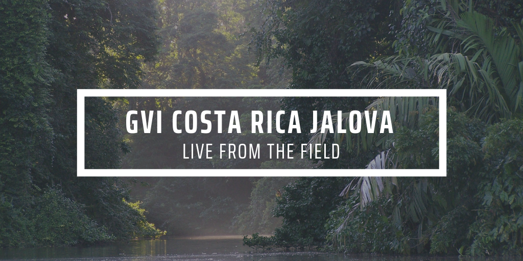 Welcome to the Jungle: My first week as a conservation Intern
