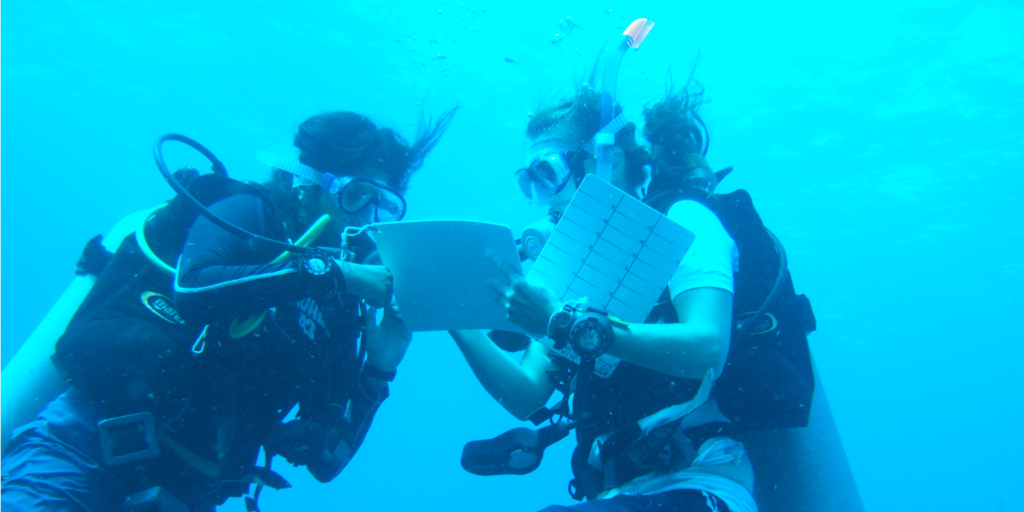 You can complete data collection at a marine conservation destination with GVI.