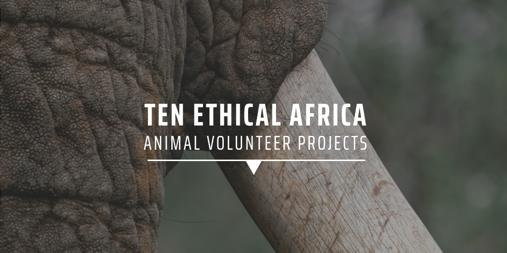 Ten ethical Africa animal volunteer projects