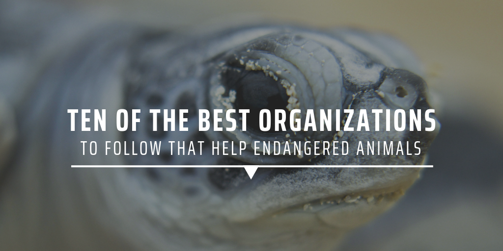 Ten Of The Best Organisations To Follow That Help Endangered Animals Gvi Usa