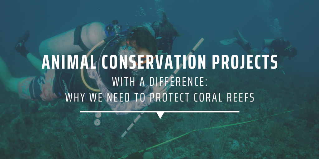 Animal conservation projects with a difference Why we need to protect coral reefs