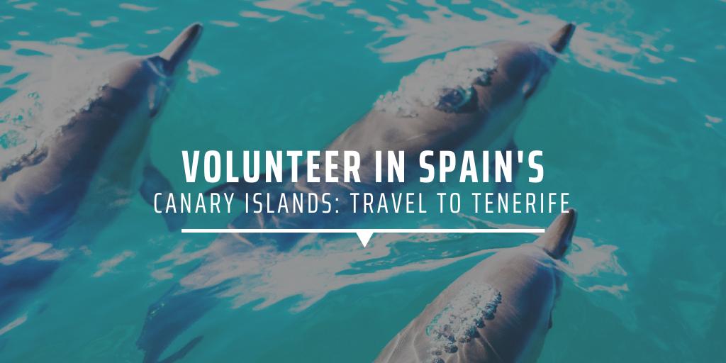 Dolphins in Tenerife