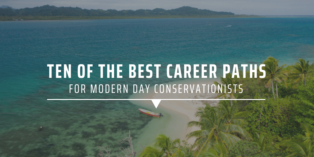 Ten of the best career paths for modern day conservationists