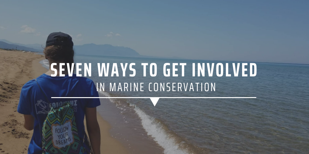 Seven ways to get involved in marine conservation.