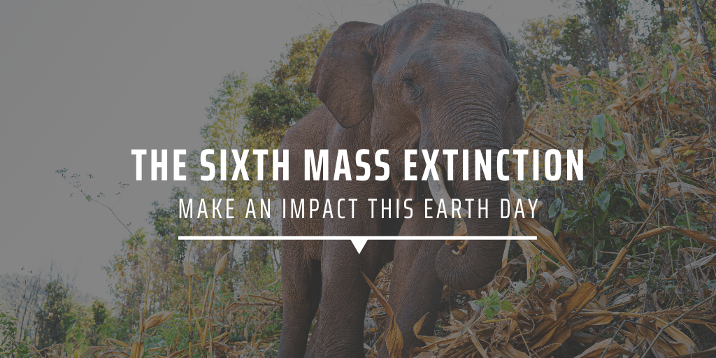 The sixth mass extinction Make an impact this Earth Day
